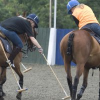 Polo experience team building activity